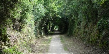 A tunnel of green